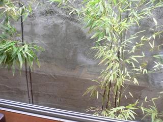 富山ランチブログ隊 達磨 店内中庭